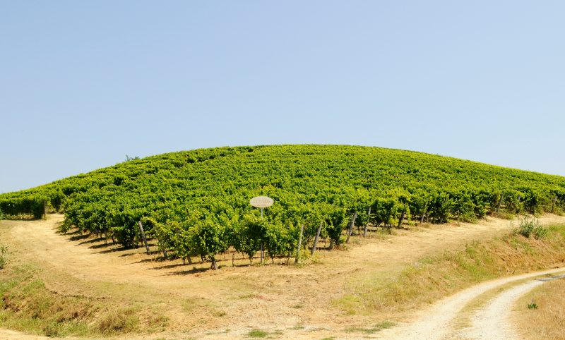 Ferraris Vineyards
