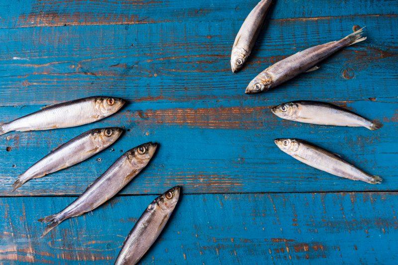 pesci di aprile sardine