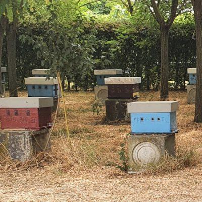 apicoltura finelli